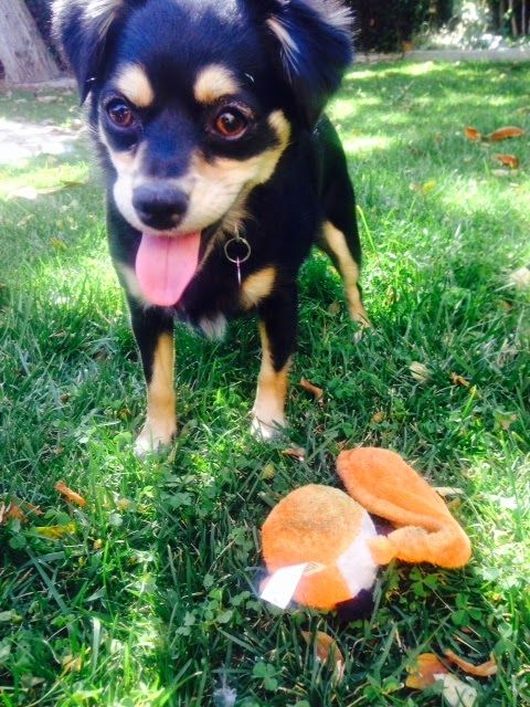 20 Life Lessons I Learned from My Dog