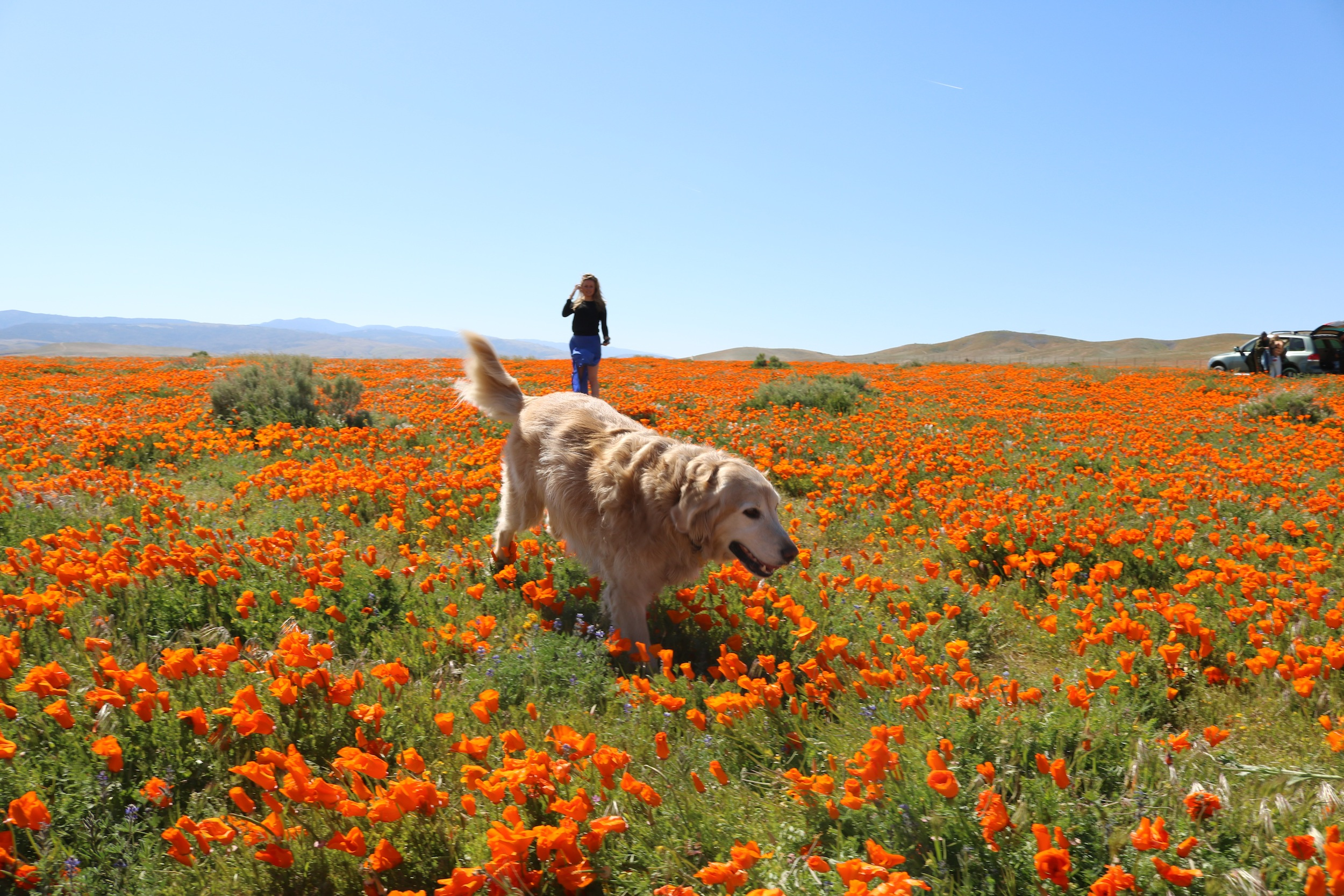 where to see wild flowers in Los Angeles