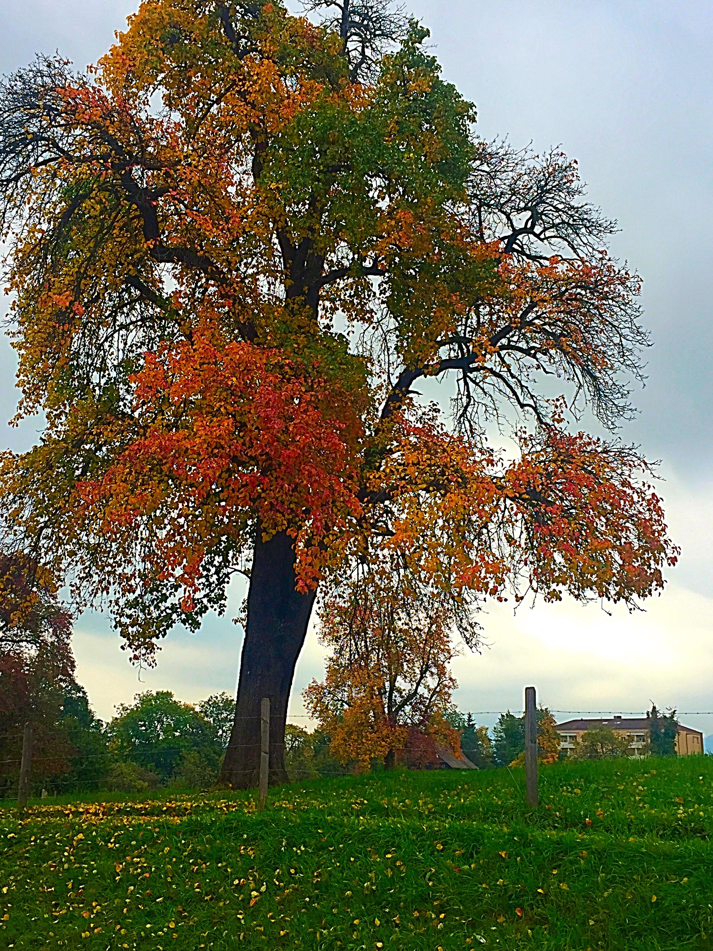 Switzerland fall foliage