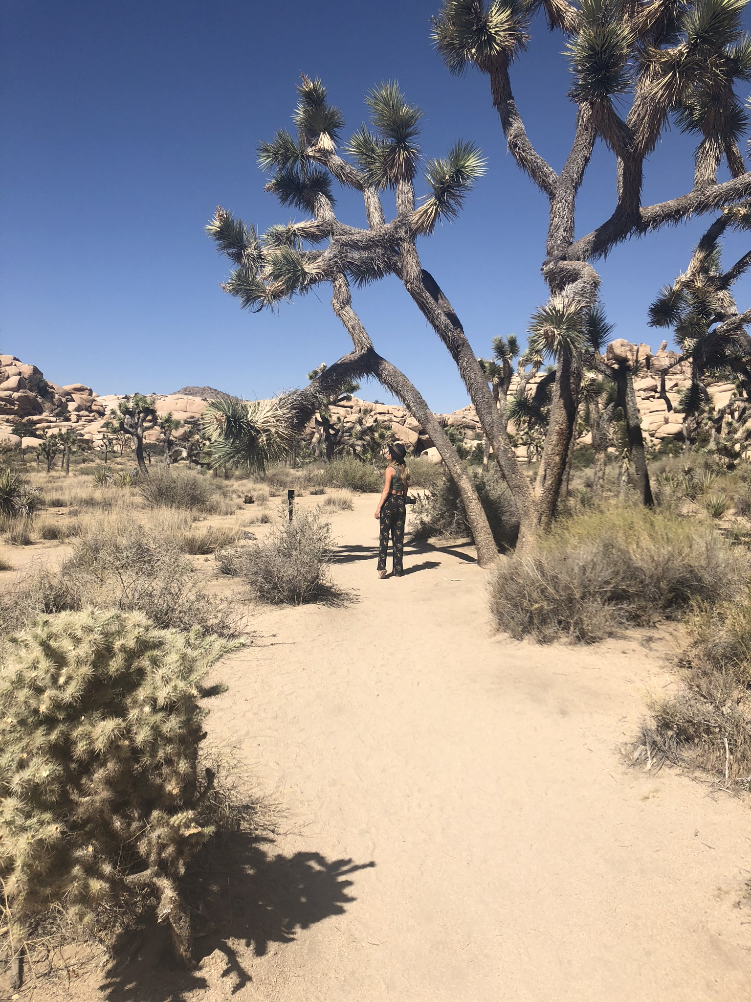 what to do in Joshua tree park for the weekend