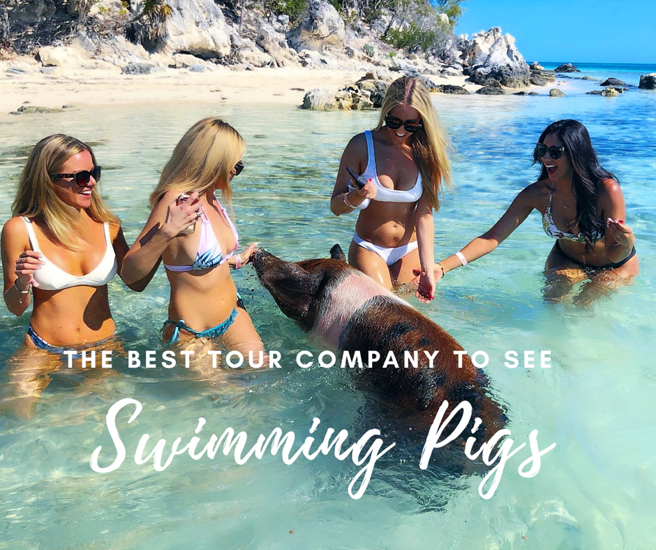 best boat company to feed swimming pigs exam