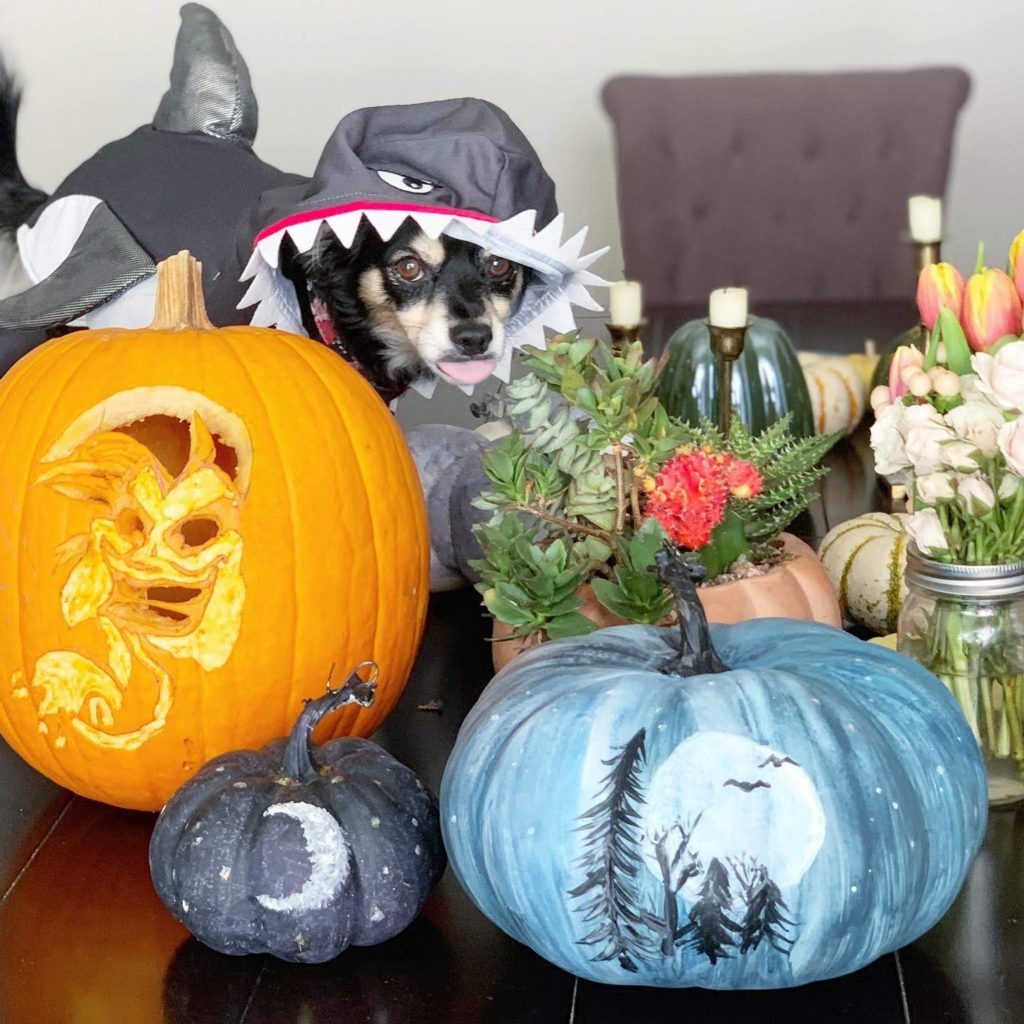 painted diy pumpkin ideas